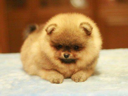 маленькие породы собак - Поиск в Google