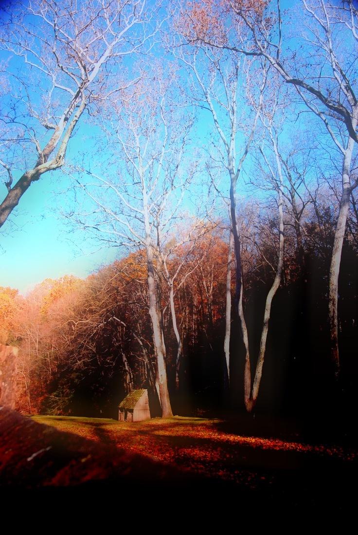 Personal Photo:  Cuttalossa Road, New Hope PA