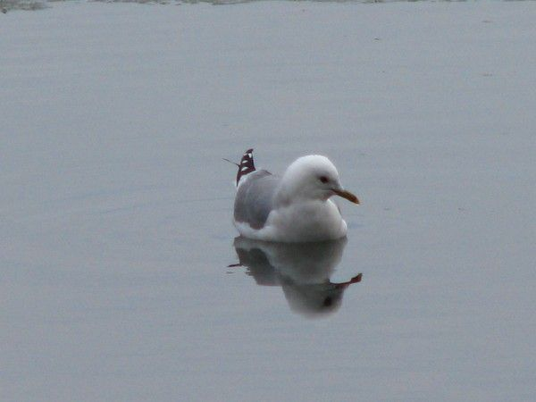 peacefully-gull series by Heli Aarniranta on ARTwanted
