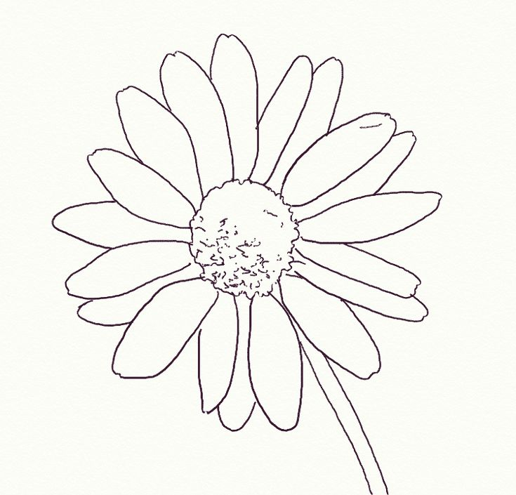 The 25 Best Ideas About Daisies Tattoo