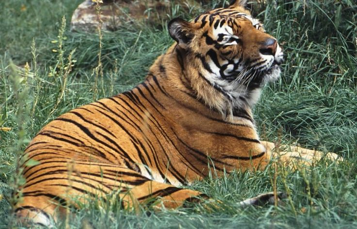 America's shockingly huge tiger population is finally getting more oversight - The Washington Post