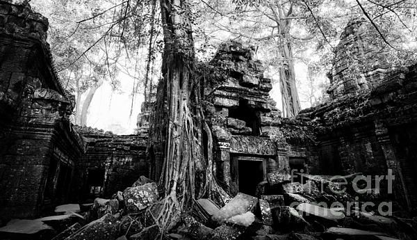 Morning view at dawn of Ta Prohm, in Cambodia in black and white.