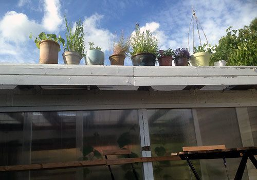 Krukker med blomster på taget