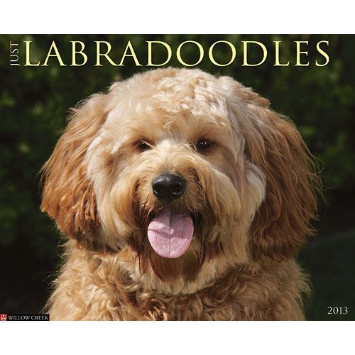 Just Labradoodles Wall Calendar: Although relatively new to the world of dogdom, Labradoodles (a hybrid cross between Labrador Retrievers and Poodles) are gaining in popularity everywhere due to their jaunty good looks and friendly nature  http://www.calendars.com/dbs/Labradoodles/Just-Labradoodles-2013-Wall-Calendar/prod201300002930/?categoryId=cat10044=cat10044