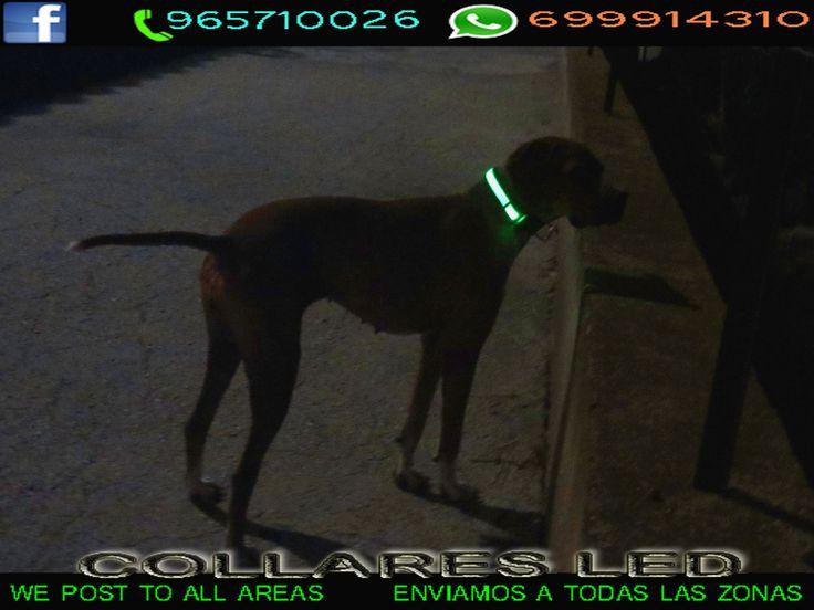collares led para perros - ESPAÑA - QUICK Anuncio
