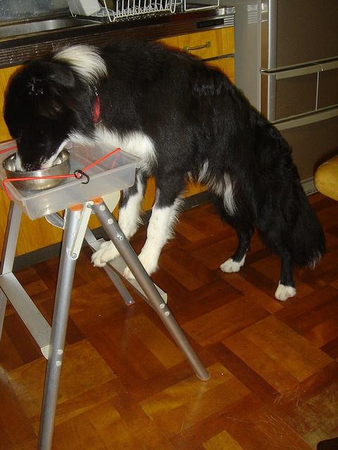 Elevated Feeding For Megaesophagus A Dog In A Box