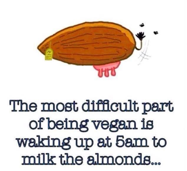 dopl3r.com - Memes and Gifs of: coconut  Coconut Milk Meme