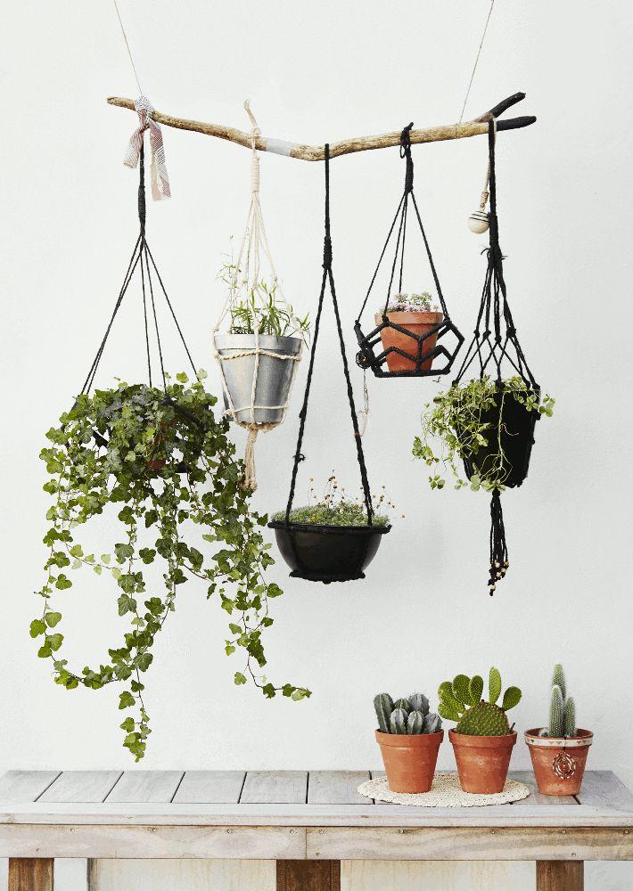 Die besten 25+ Hängende pflanzen Ideen auf Pinterest - moderne wohnzimmer pflanzen