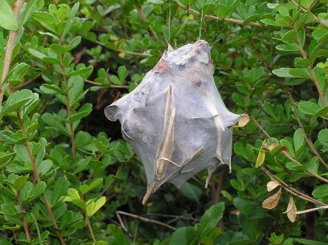 Rain Spider nest.jpg (640×479)