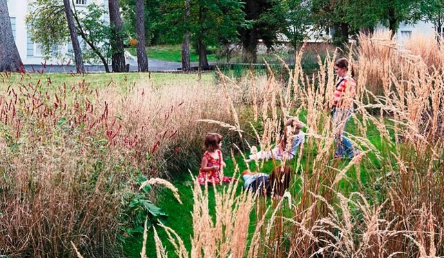 97 best jude 39 s garden images on pinterest playground for Natural grasses for landscaping