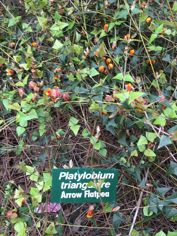 Buckland Bushland gardens - SE Tasmanian plants