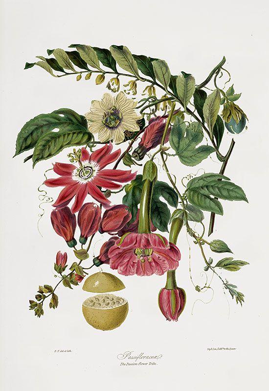 Les 444 meilleures images du tableau botanique herbiers for Botanic fleurs artificielles