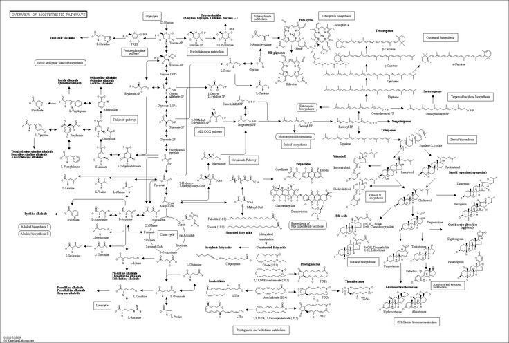 characterization of biochemical pathways The phospholipid phosphatidylinositol and its phosphorylated derivatives, collectively referred to as phosphoinositides, form the basis for a multifaceted signaling pathway regulating many different cellular processes in eukaryotic cells.