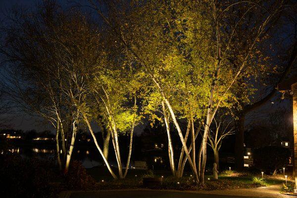 Uplights On A Grove Of Trees Landscape Lighting Tree
