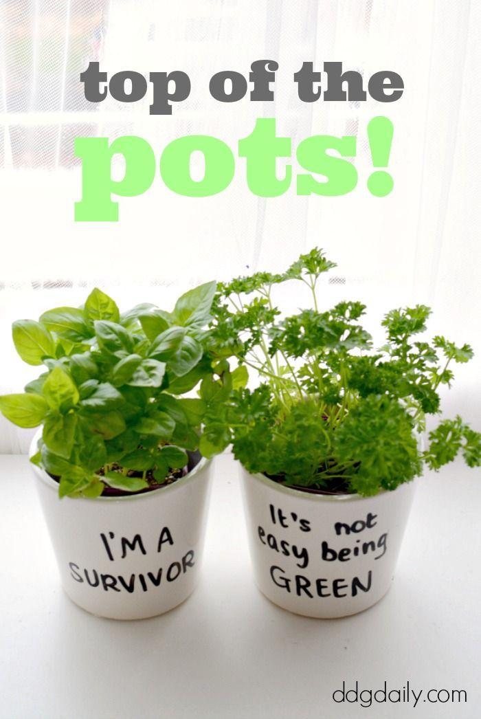 DDG DIY: Top of the pots planters DIY
