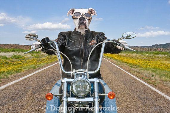 Né pour être sauvage grande photographie par DogtownArtworks                                                                                                                                                                                 Plus