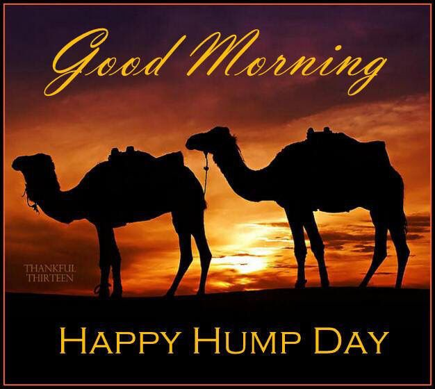 Good Morning Happy Hump Day Camels good morning wednesday hump day humpday hump day camel wednesday quotes happy wednesday good morning wednesday wednesday quote happy wednesday quotes