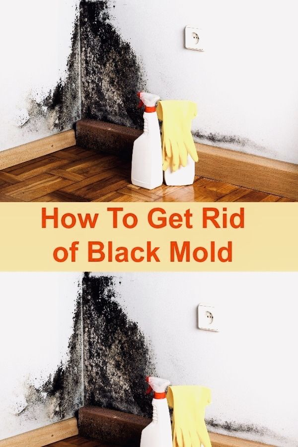 52fc2ae8e1fca683b85075b5b9fe4339 - How To Get Rid Of The Mold In The House