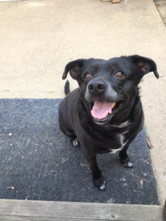 Lost Dog Female Chillicothe Oh Usa 45601 Losing A Dog