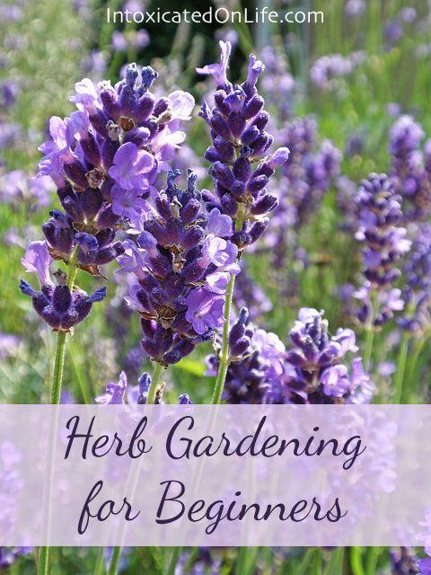 Herb Gardening for Beginners on IntoxicatedOnLife.com