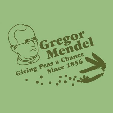 gregor mendel for kids While mendel's research was with plants, the basic underlying principles of heredity that he discovered also apply to people and other animals because the.