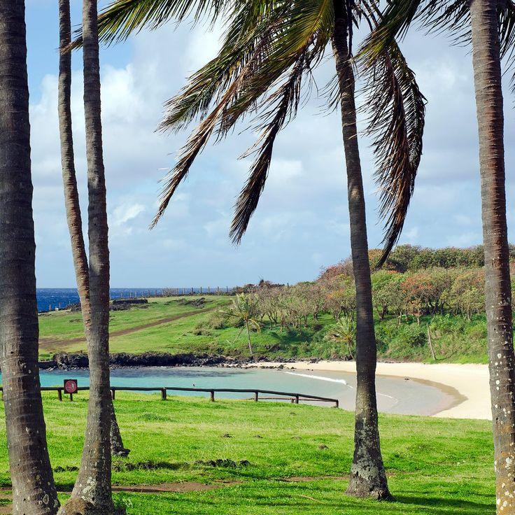 Seguimos na costa norte da #IlhaDePáscoa para visitar a #Playa de #Anakena onde segundo a lenda foi o lugar escolhido para o desembarque do Ariki Hotu Matua e sua família origem da primeira cidade e da cultura #RapaNui. Devido ao valor histórico este é um dos locais mais venerados na ilha.  Sabendo-se que a #Polinésia é um dos destinos de #praia mais famosos do mundo imaginávamos que aqui encontraríamos ótimos lugares para banho entretanto Anakena é a única praia de verdade da Ilha de Páscoa…