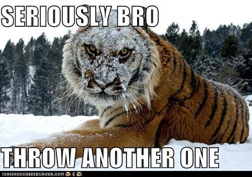 Dare you..: Big Cat, Serious Bro, Siberian Tiger, Funny Pictures, Snow Tiger, Funny Stuff, Snowball Fight, Funny Animal, I Dare You