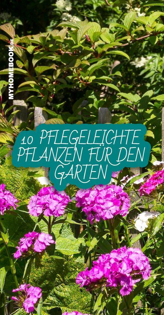 10 pflegeleichte Pflanzen für den Garten – #blume…