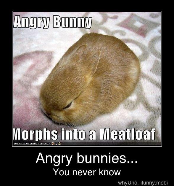 63 Best Bunny Memes Images On Pinterest Pets Adorable