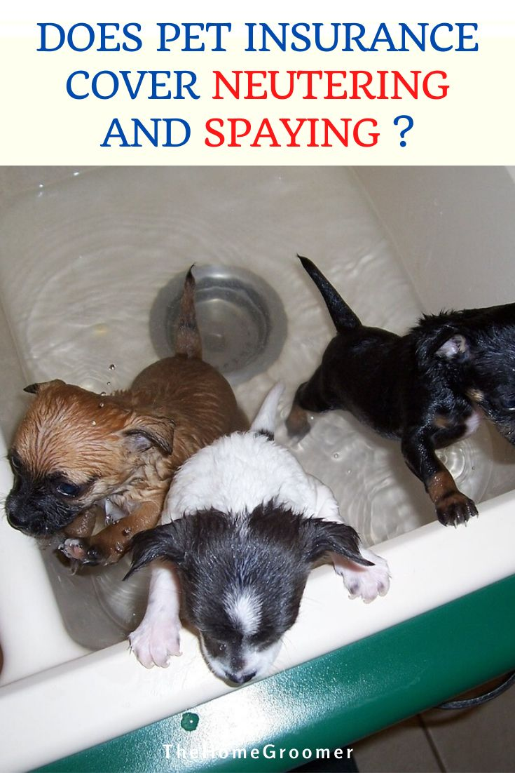 Does pet insurance cover neutering and spaying