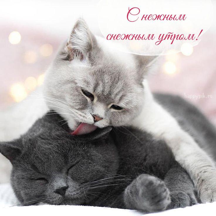 Дня рождения, открытка любимому с кошками