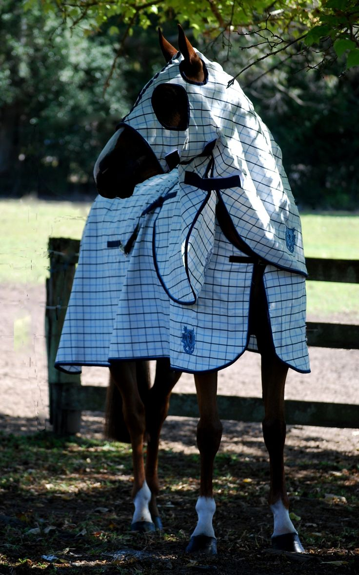 STABLE 8 SHOW SET COLLARCHECK NAVY/SKY