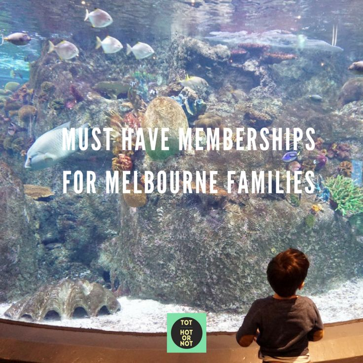 The HOT List: 12 Best Memberships for Melbourne Families http://tothotornot.com/2016/12/memberships-for-melbourne-families/