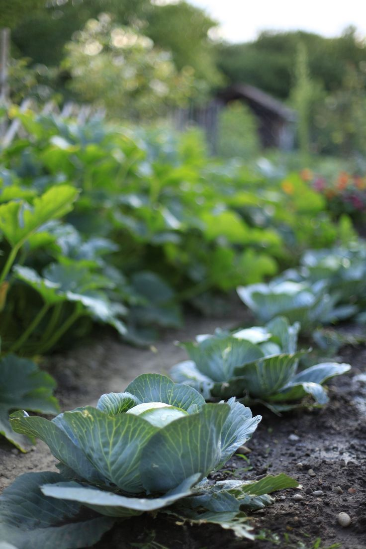 Le potager gourmand - botanic®