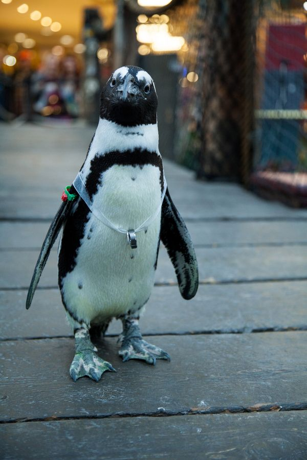 Real #Wedding Wednesday ~ Married at the Mall with a Penguin as the Ring Bearer!
