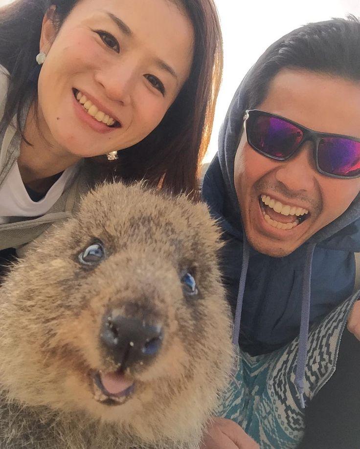 人間より写真うつりよすぎー あー癒された #rottnestisland #perth #australia #quokka #quokkaselfie #quokkas #quokkalove #thehappinestanimal #animal #ausie #ロットネスト島 #ロットネストアイランド #クォッカ #クォッカセルフィー #パース #オーストラリア #世界一幸せな動物 #世界一の笑顔 by plu_chan6 http://ift.tt/1L5GqLp