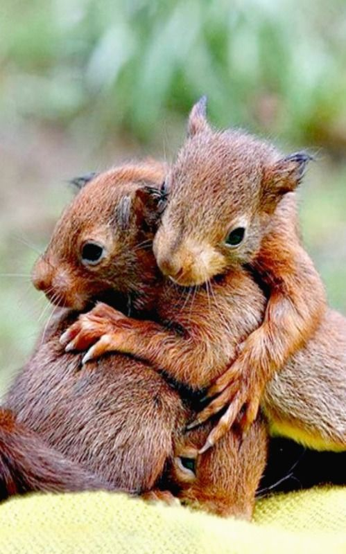 """""""Hugs"""" - Ask your students what kind of animal is in the picture. What are they doing? Why are they doing this? Write their responses. Together write a story."""