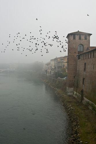Un giorno d'inverno a Verona con stormo di piccioni | da Marialba Italia su Flickr {collected by Via Optimae, www.viaoptimae.com}