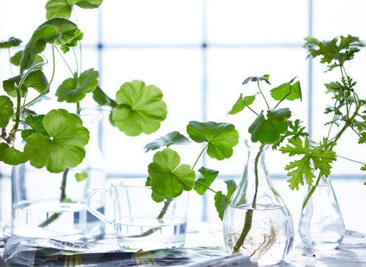 Comment pendre soin de ses plantes en hiver
