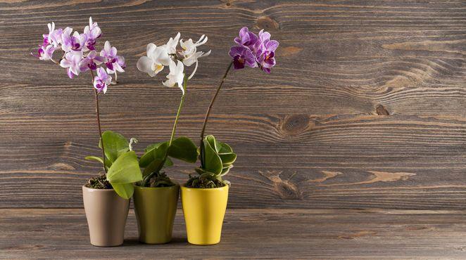 grüner daumen - Orchideen richtig pflegen