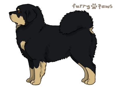 Furry Paws // WCH Kip's Over the Moonie Moon [21HH 1.538] *BoB*x2's Kennel