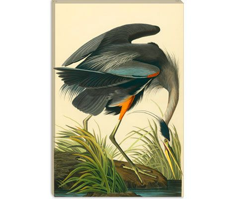 Hey, I found this really awesome Etsy listing at https://www.etsy.com/au/listing/99024367/great-blue-heron-by-john-james-audubon