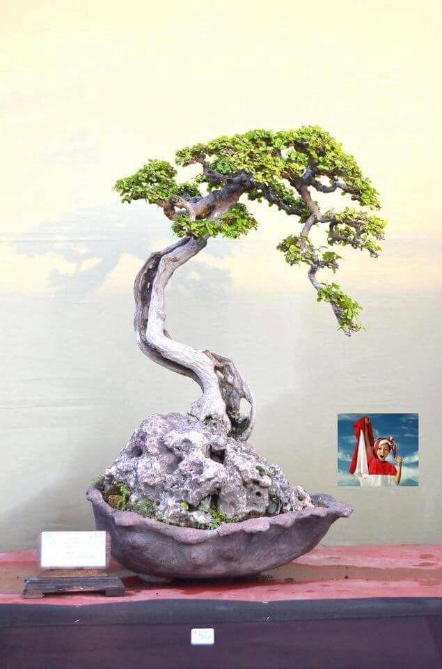 about Bonsai Tree Tattoos on Pinterest | Tree Tattoos Tree Tattoo ...