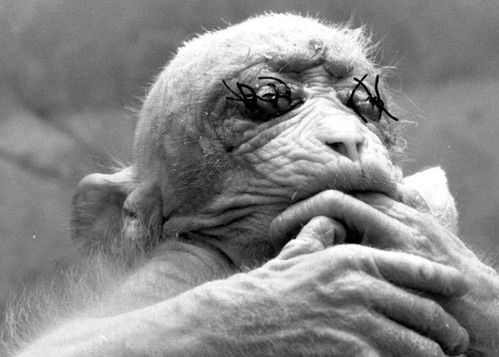 Estos 8 Aterradores Experimentos Son La Prueba De Que Los Científicos Locos Existen - #¡WOW!=¡Sí,Increíble!  http://www.vivavive.com/experimentos-terrorificos/