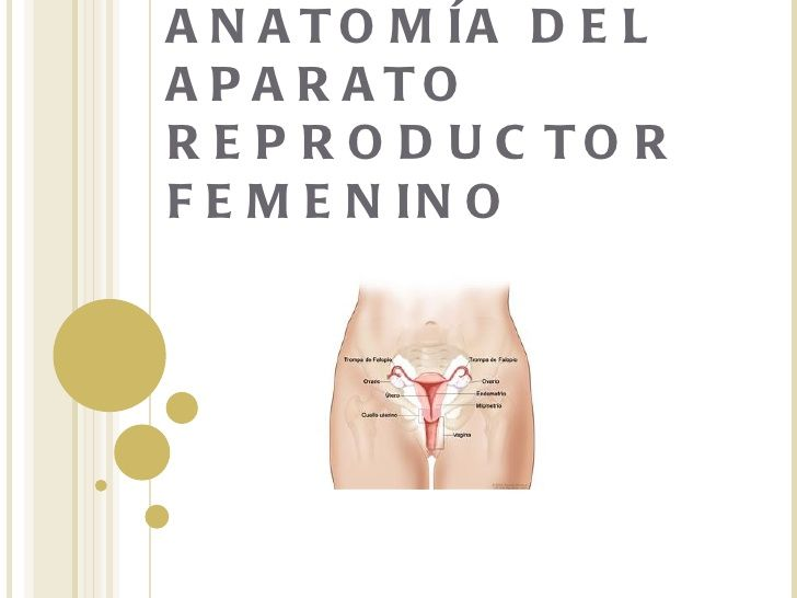 Anatomía del aparato reproductor femenino by HOSPITAL PRIMERO DE MAYO via slideshare