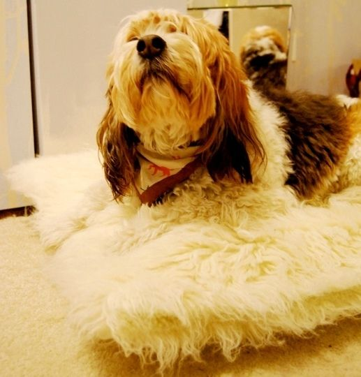 Make a fluffy dog bed from Ikea chair cover.....  Great idea for repurposing any upholstery..... I'll need two pillows for a large bed, though.