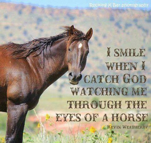 Horse Eye Quotes. QuotesGram