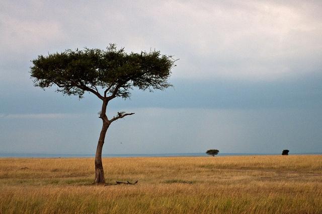 Beautiful evening view in the African savanna  Kenya