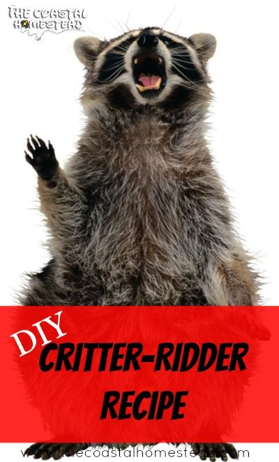 Rodent Repellent: DIY Critter Ridder Recipe. Make This Rodent Repellent For  Just Pennies And Protect Your Home And Garden From Rodents And Critters.