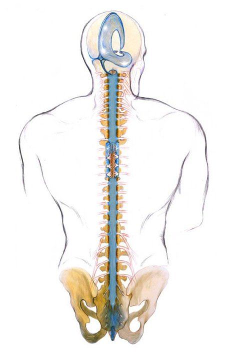 A to-and-fro or back and forth oscillation of the sacrum should be noted. Specific training for cranial sacral therapy focuses on this mechanism.